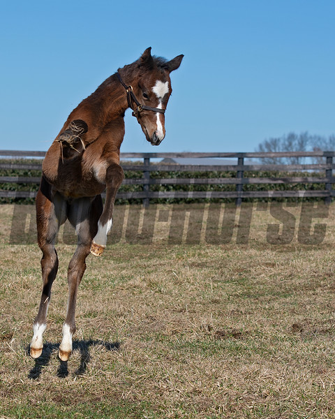 like a pogo stick, woopee!<br /> Flawless with her 2021 colt, a full brother to Authentic, at Hurricane Place farm near Cynthiana, Ky., on March 3, 2021.