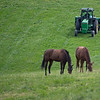 Caption: horses graze while grass is mowed<br /> Grovendale, scenes, near Lexington, Ky.,  on April 15, 2020 Mill Ridge in Lexington, KY.