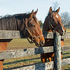 (L-R): Patch and Stormy Liberal.<br /> Old Friends near Georgetown, Ky., on Dec. 11, 2020.