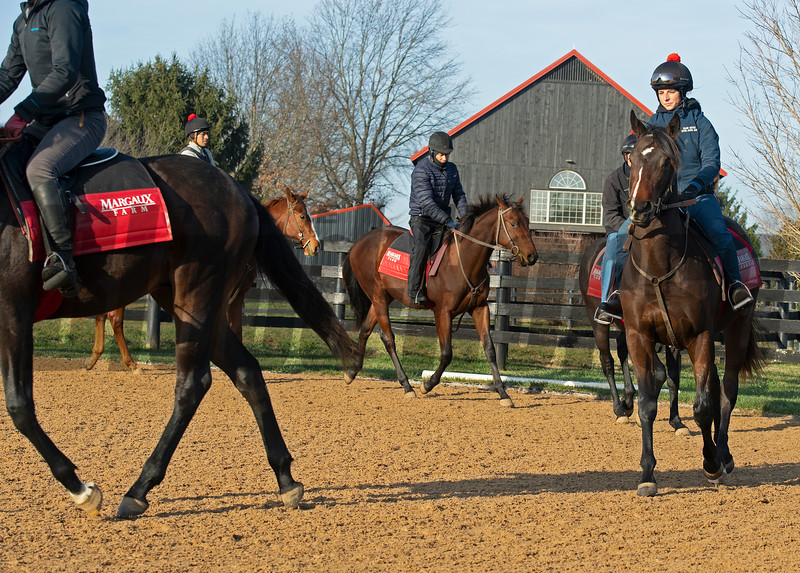 Yearlings (in 2020) undertack training at Jim and Susan Hill's Margaux Farm near Midway, Ky., on Dec. 8, 2020.