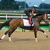 Shedaresthedevil at Churchill Downs Monday, Aug. 31, 2020. Photo: Anne M. Eberhardt