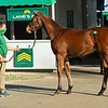 Hip 612 filly by Justify out of Emma's Encore from Lane's End, agent<br /> Sales horses at the Keeneland November Sale at Keeneland in Lexington, Ky. on November 9, 2020.