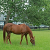 Caption: Funny Cide in his paddock<br /> Funny Cide aat the Kentucky Horse Park near Lexington, Ky., on Sept. 1, 2020 Kentucky Horse Park in Lexington, KY.