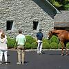 Visitors looking at Justify.<br /> Stallions Uncle Mo, Justify, and American Pharaoh at Ashford Stud on June 23, 2021.