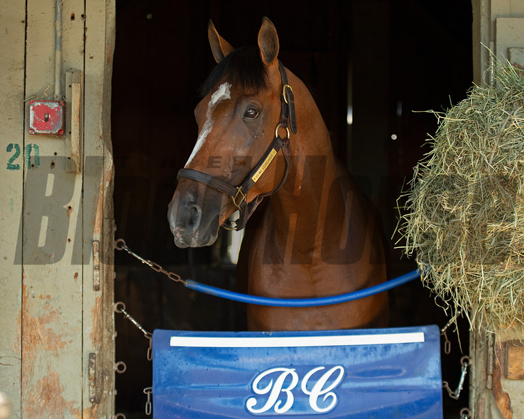 By My Standards<br /> Saratoga racing scenes in Saratoga Springs, N.Y. on Aug. 5, 2021.
