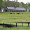 mares in a field<br /> Scenes at Hill 'n' Dale (Xalapa) near Paris, Ky., on April 14, 2021.