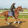 Sittin on Go<br /> Breeders' Cup horses at Keeneland in Lexington, Ky. on November 5, 2020.