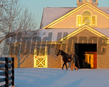 Caption: At sunrise, Dynaformer is lead from his stall to his paddock at Three Chimneys Farm near Midway, Ky. on Dec. 13, 2010. Winter scenes in Central Kentucky on Dec. 12-13, 2010. TC Winter Stallions image4097 Photo by Anne M. Eberhardt