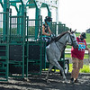 Caption: Angel Oakswith Jess Woodall learns  about the starting gate<br /> A native of Oklahoma, Heath started working at WinStar Farm on October 10, 2014, and became the farm trainer in October of 2018. Presently he has about 100 horses in training at the WinStar Farm training center, where they have a 7 1/2-furlong main track and 3/4 of a mile undulating turf gallop.<br /> Daily Life series on Destin Heath, farm trainer at WinStar Farm on Aug. 11, 2020 WinStar Farm in Versailles, KY.