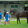 Scene with Hip 3, a colt bby Good Samaritan out of Casey's<br /> Irish Pride at Gainesway. Scenes, people and horses at The July Sale at Fasig-Tipton near Lexington, Ky. on July 11, 2021.