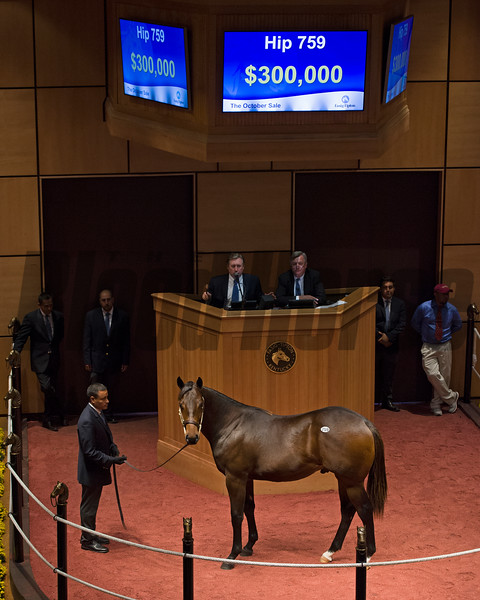 Hip 759 colt by Orb from Zealous Gold brings $300,000.<br /> Fasig-Tipton Kentucky October sales at Fasig-Tipton in Lexington, Ky., on Oct. 25, 2016.