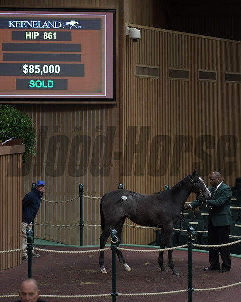 Hip 861 filly by Palace Malice from Kid Silver and Perrone Sales brings $85,000 on Jan. 10, 2018, at Keeneland January sales in Lexington, Ky.