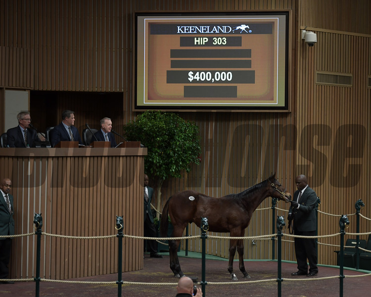 Hip 303 American Pharoah colt from Air France and Pope McLean (Crestwood Farm).