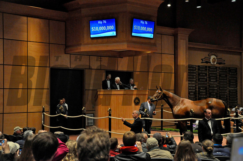 Caption: Hip 76 Havre de Grace, who was consigned by Taylor Made and brought $10 million from Mandy Pope, in the ring when the hammer falls.<br /> Horses sell at the Fasig-Tipton Kentucky November sales on Nov. 5, 2012, in Lexington, Ky.<br /> FTKNovSales Origs1 Havre de Grace image70<br /> Photo by Anne M. Eberhardt
