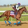 Alda<br /> Breeders' Cup horses at Keeneland in Lexington, Ky. on November 5, 2020.