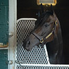 Caption: in stall<br /> Midnight Bisou at Keeneland on May 2, 2020 Keeneland in Lexington, KY.