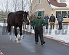 Honor Code<br /> Lane's End Press Pass event at Lane's End Farm in Versailles, Ky., on Jan. 17, 2018.