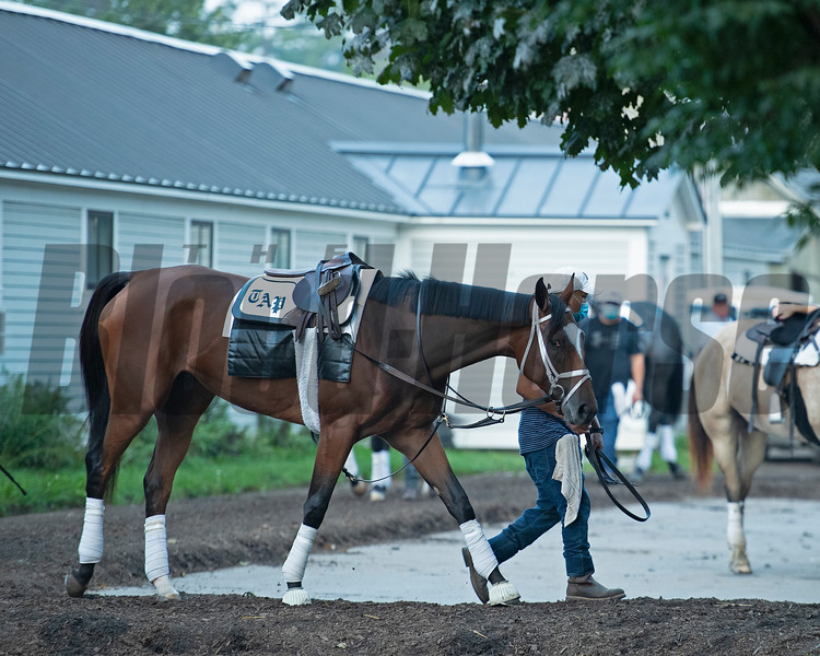Malathaat<br /> Horses in training during Travers week in Saratoga on Aug. 26, 2021.