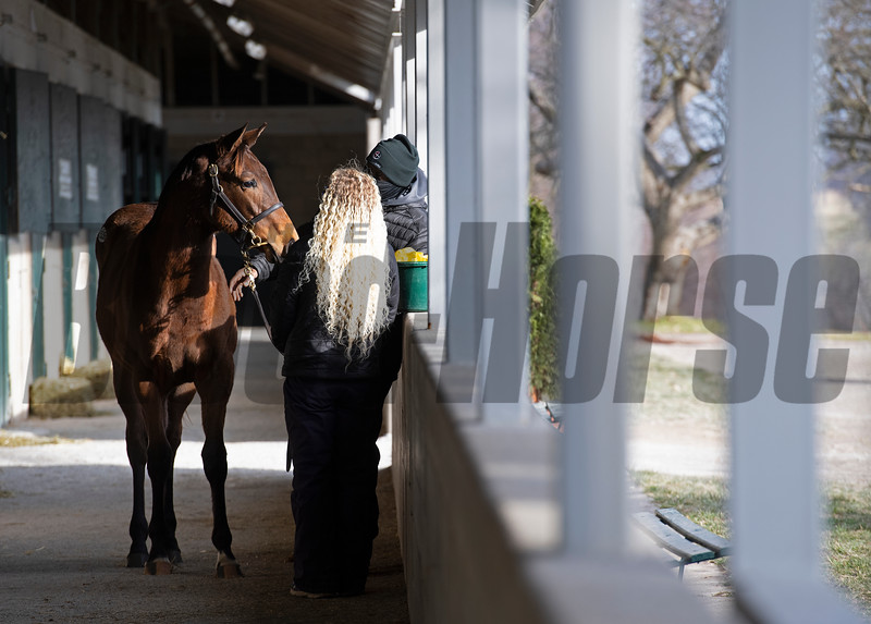 prepping horse to take to ring<br /> Keeneland January Sales at Keeneland near Lexington, Ky., on Jan. 14, 2021.