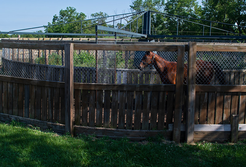 Justify yearling out of Screaming Skylar at Rose Hill Farm in Lexington, Ky., and swimming at Kesmarc in Versailles, Ky. on June 28, 2021.
