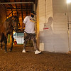 Victor Martinez walking King Guillermo at Churchill Downs Sunday, August 30, 2020. Photo: Anne M. Eberhardt