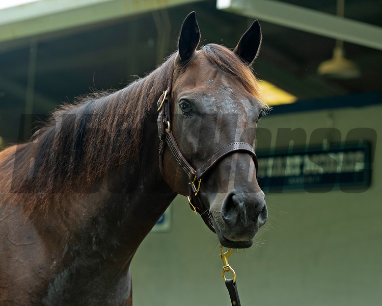 Hip 404 Monopole from Stuart Morris breeding portion of consignment<br /> Scenes, people and horses at The July Sale at Fasig-Tipton near Lexington, Ky. on July 10, 2021.