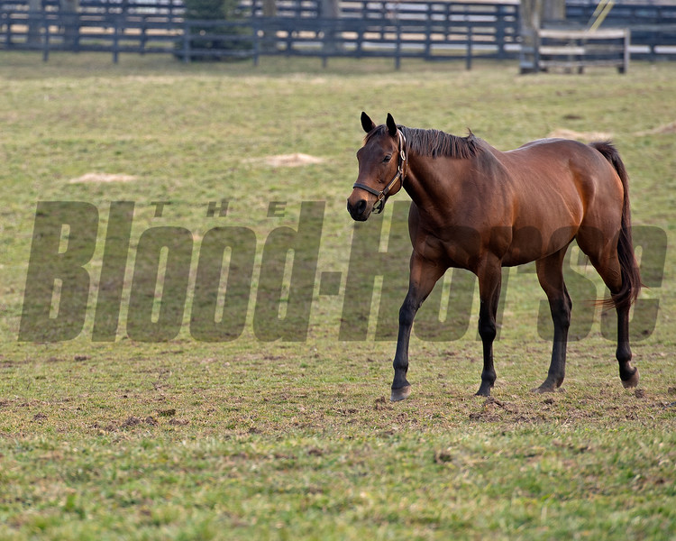 in her paddock<br /> Drumette owned by Bridlewood is in Kentucky to be bred to Tapit and resides at a division of Gunston Hall on March 9, 2021.