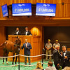 Hip 73 colt by Uncle Mo out of Dame Dorothy from Stone Farm<br /> Sales scenes at Fasig-Tipton in Saratoga Springs, N.Y. on Aug. 9, 2021.