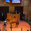 Hip 149 filly by Justify out of Emma's Encore at Baccari Bloodstock<br /> Scenes, people and horses at The July Sale at Fasig-Tipton near Lexington, Ky. on July 13, 2021.