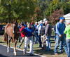 Fasig-Tipton Kentucky October sale on Oct. 24, 2016
