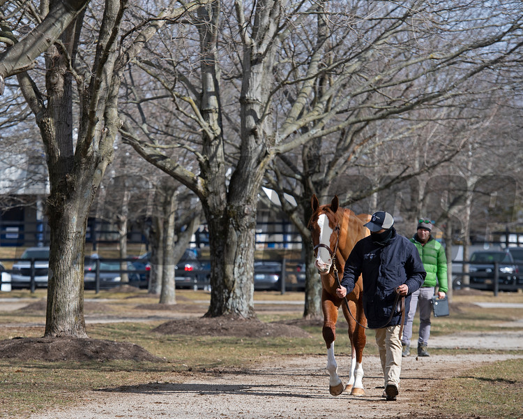 Scene with Hip 522 Lady Quintessa from Brookdale Sales at Fasig-Tipton Winter Mixed Sale in Lexington, Ky. on Feb. 6, 2021.