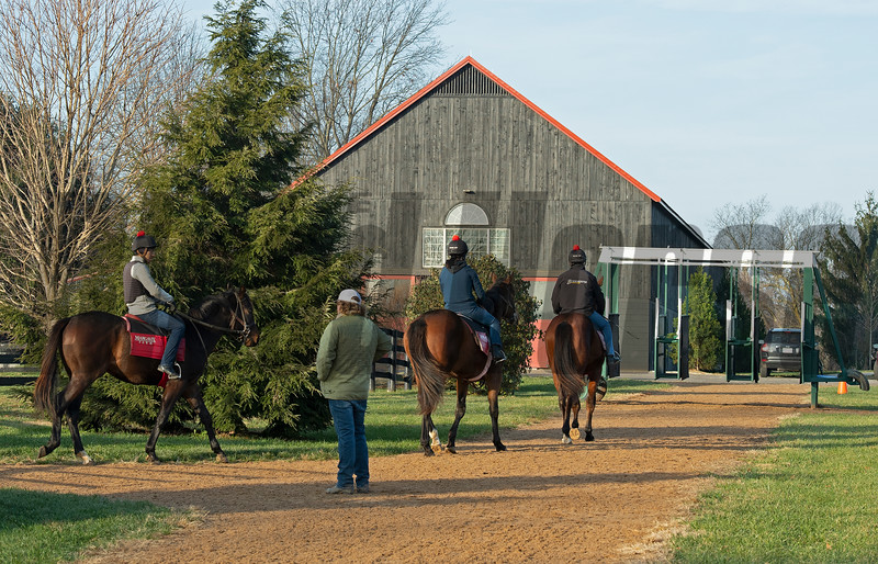 Training under Dermot Littlefield at Jim and Susan Hill's Margaux Farm near Midway, Ky., on Dec. 8, 2020.