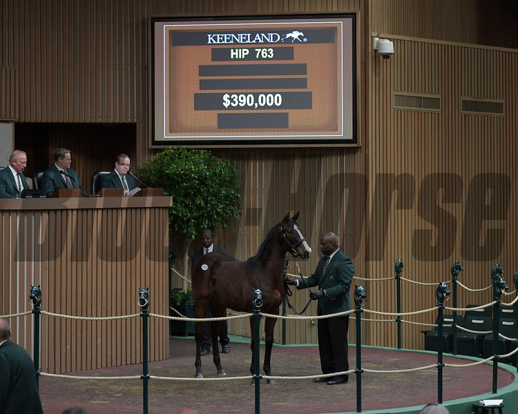 Hip 763 colts by War Front from Circle the Empire brings $390,000 from Chris Baccari Consigned by Eaton Sales, Agent