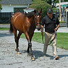 Hip 117 colt by War Front out of Indy Punch from Blake-Albina Thoroughbred Services<br /> Saratoga training and sales scenes at Saratoga Oklahoma track and Fasig-Tipton in Saratoga Springs, N.Y. on Aug. 6, 2021.