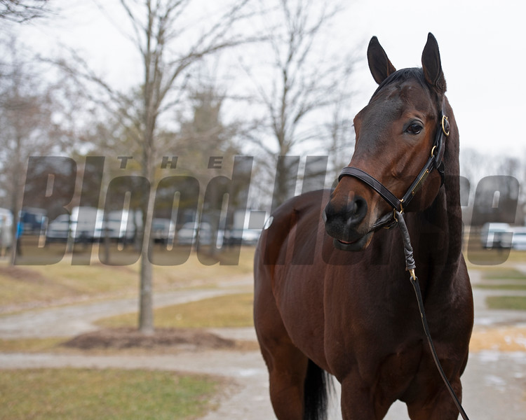 Hip 671 Gold Standard from Gainesway at Fasig-Tipton Winter Mixed consignment on Feb. 6, 2021.