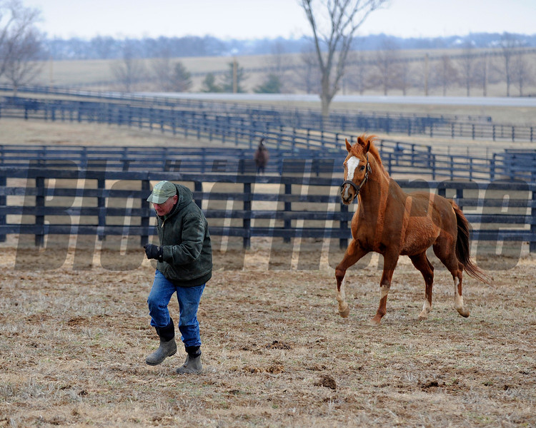Caption: Having fun, Blowen goes into the paddock and (with a head start) runs with Marquetry.<br /> Michael Blowen and the horses at Old Friends retirement home near Georgetown, Ky. on Jan. 31, 2011.<br /> Origs1 image449<br /> Photo by Anne M. Eberhardt