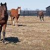 Yearlings in a field.<br /> Scenes at Blue Heaven Farm near Versailles, Ky. on Feb. 23, 2021.