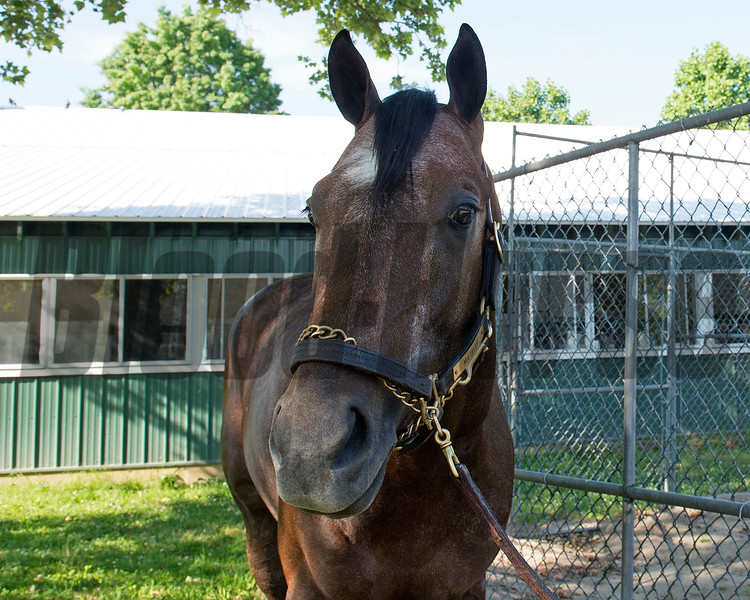 Multiplier, morning after<br /> Tapwrit and other contenders the morning after the Belmont Stakes Presented by NYRA Bets (G1) at Belmont Park  on June 11, 2017 in Elmont, New York.