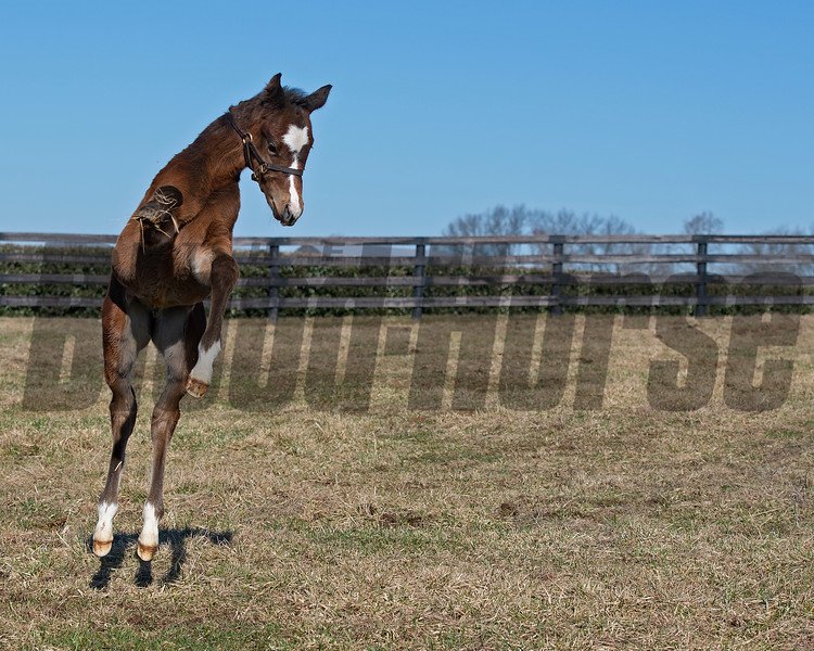 Flawless with her 2021 colt, a full brother to Authentic, at Hurricane Place farm near Cynthiana, Ky., on March 3, 2021. Photo: Anne M. Eberhardt
