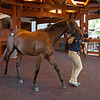 Hiip 111 colt by Qualiity Road out of Harmonize at Brookdale<br /> Sales scenes at Fasig-Tipton in Saratoga Springs, N.Y. on Aug. 10, 2021.
