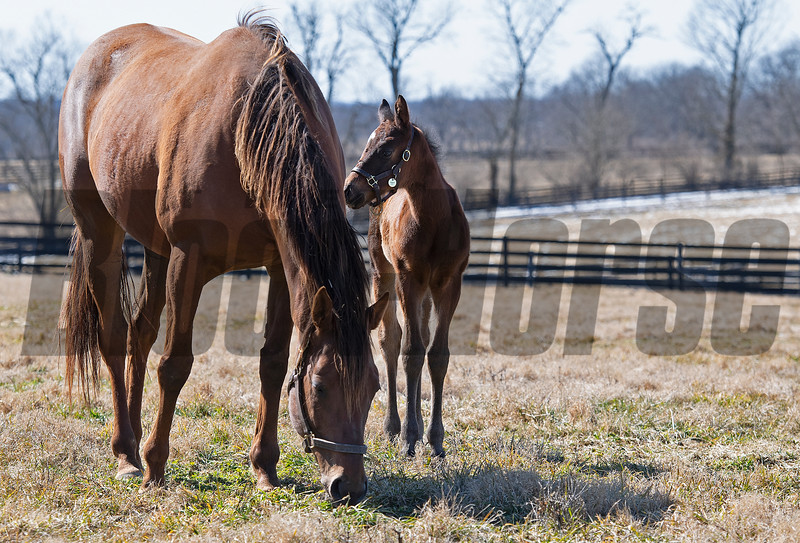 Virgina Key with her first foal, a Medaglia d'Oro filly<br /> Scenes at Blue Heaven Farm near Versailles, Ky. on Feb. 23, 2021.