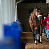 Caption: Owendale <br /> Keeneland scenes and horses on April 25, 2020 Keeneland in Lexington, KY.