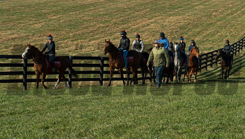 Training under guidance of farm trainer Dermot Littlefield at Jim and Susan Hill's Margaux Farm near Midway, Ky., on Dec. 8, 2020.