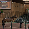 Hip 1573 Mr Classical from Mill Ridge Sales, agent, for 80,000 from Fergus Galvin.