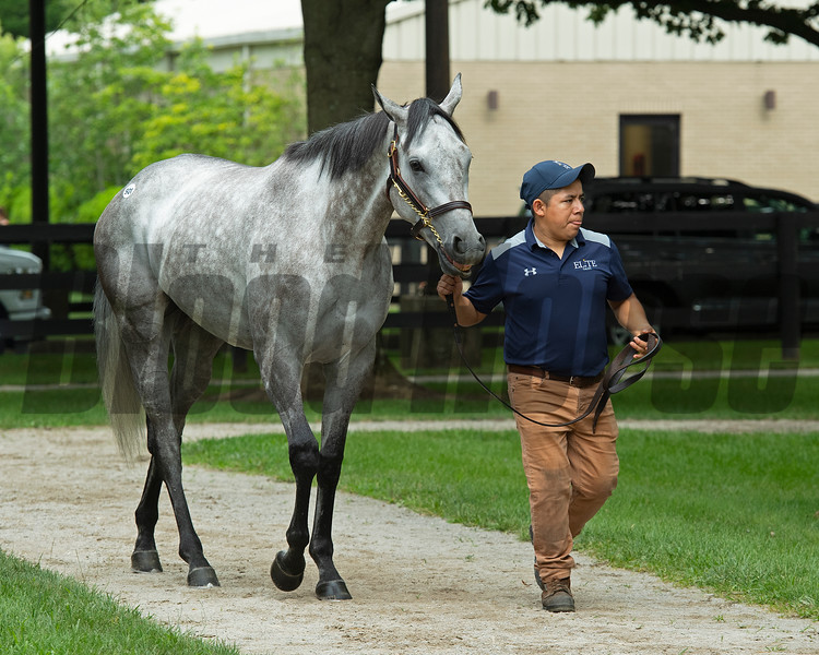 Hip 501 Josie at Elite Sales. Scenes, people and horses at The July Sale at Fasig-Tipton near Lexington, Ky. on July 10, 2021.