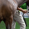 yearling and handler<br /> Scenes, people and horses at The July Sale at Fasig-Tipton near Lexington, Ky. on July 12, 2021.
