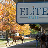 Scene at ELiTE Sales as Hip 228 Uni is shown. <br /> Sales horses at The November Sale at Fasig-Tipton Kentucky in Lexington, Ky. on November 8, 2020.