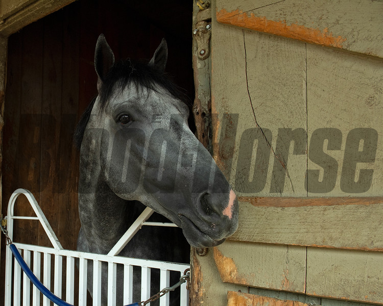 Knicks Go the morning after the Whitney.<br /> Saratoga racing scenes at Saratoga in Saratoga Springs, N.Y. on Aug. 7, 2021.