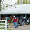 Caption: Brad Cox horses prepared before leaving to train at the main track. Owendale, left front, being held by groom in red. <br /> Keeneland scenes and horses on April 25, 2020 Keeneland in Lexington, KY.