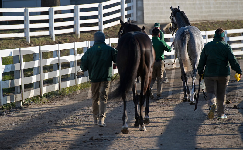walking horses to the sales pavilion<br /> Keeneland January Sales at Keeneland near Lexington, Ky., on Jan. 14, 2021.